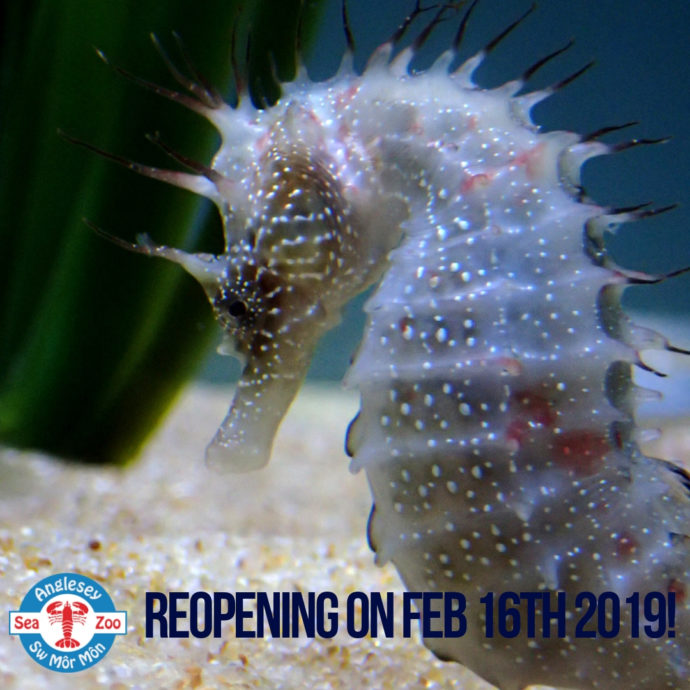 Reopening On Feb 16Th 2019