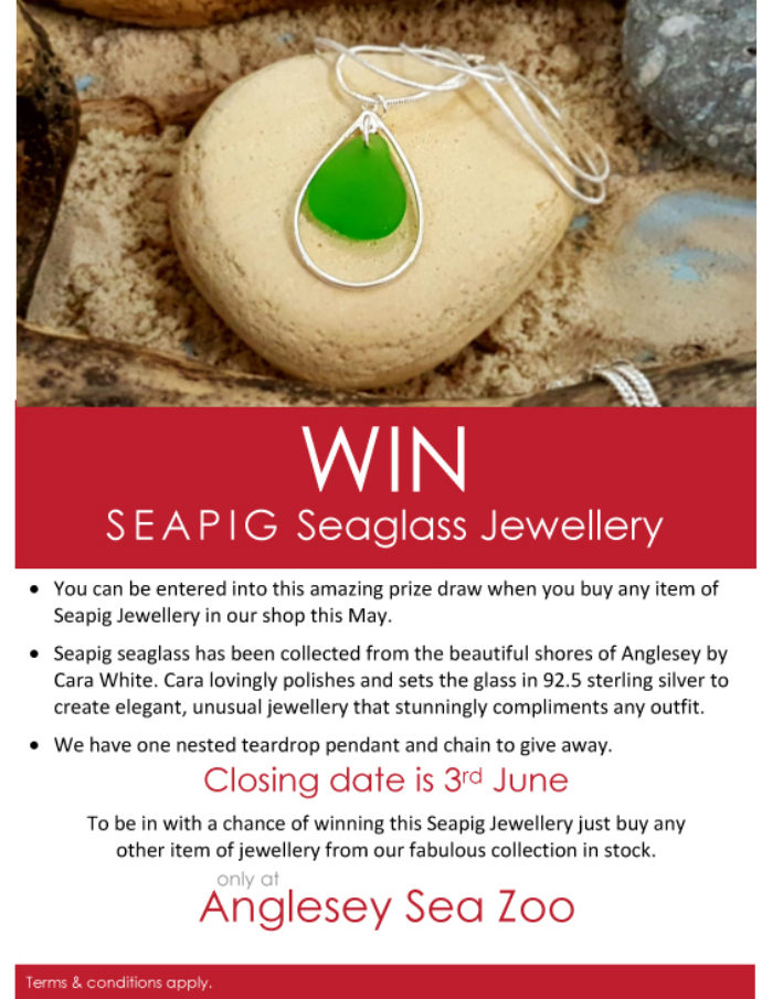 Seapig Give Away 1
