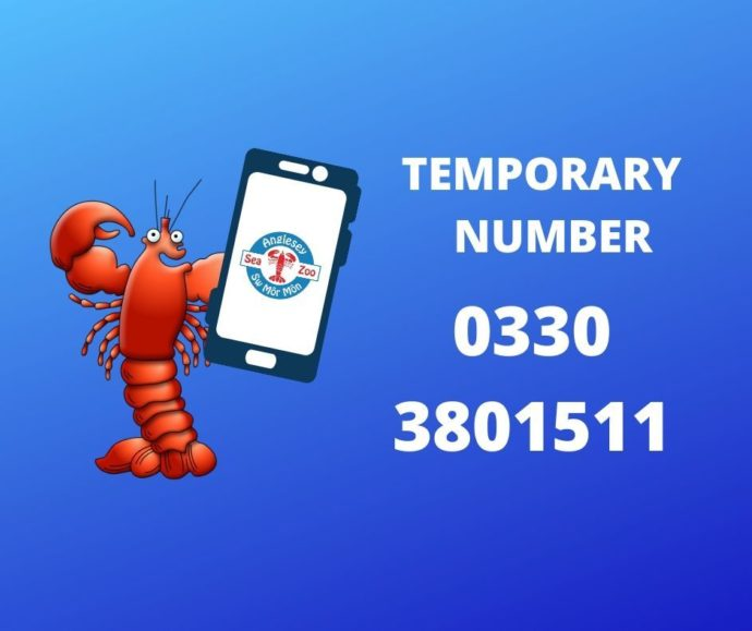 Temporary Phone number